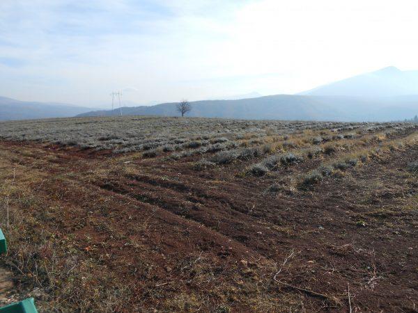 Tamnjanica Bela Palanka poljoprivreda